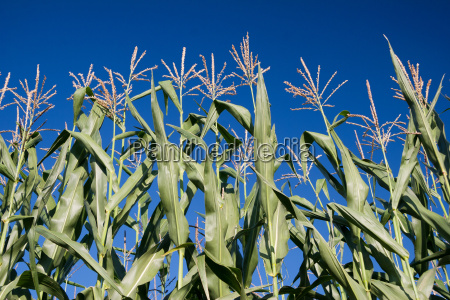 agriculture farming useful plant summer summerly