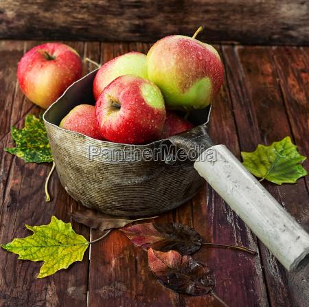 apples autumn varieties