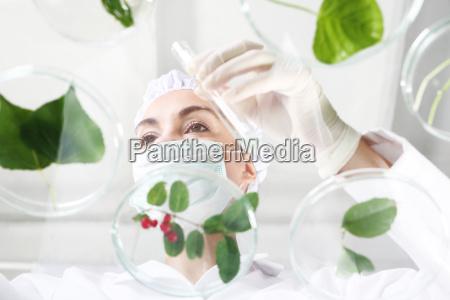 laboratory analysis of plants