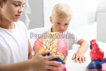 lekcja anatomii budowa czlowieka dzieci ogladaja