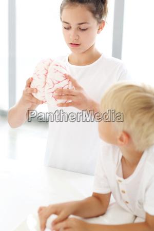 dzieci skladaja model mozgu