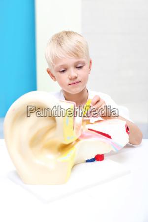 dzieci ogladaja modell ludzkiego ucha