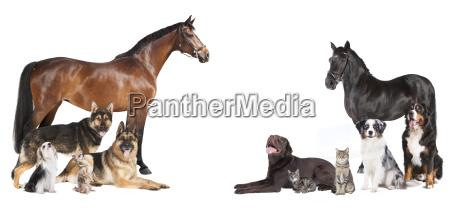 pferde, und, hunde, collage - 19201289