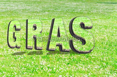 das wort gras aus gruener grasstruktur