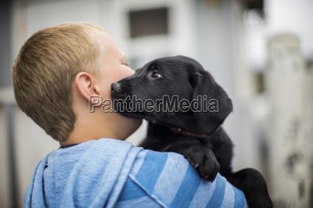 neugierige labrador welpen liebevoll schnueffeln seinen