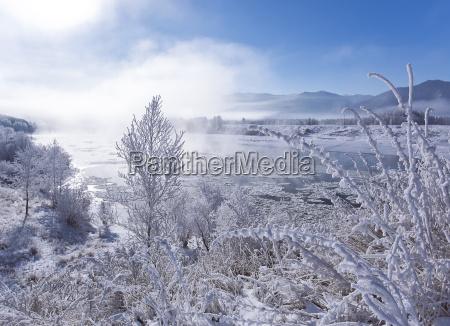 winter landscape frosty winter plants