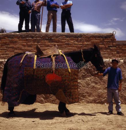 brown pferd ein traditionelles kostuem traegt