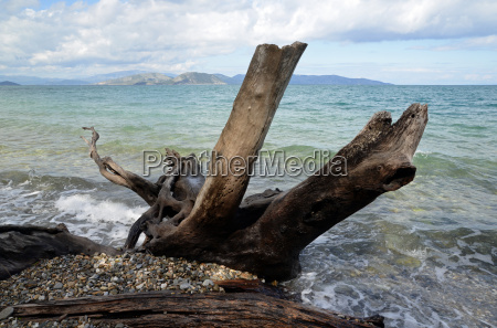 driftwood on the turkish mediterranean coast