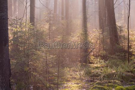 natuerlicher nadelstand des landschaftsschutzgebietes