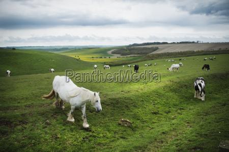 anhoehe huegel pferd ross tier saeugetier