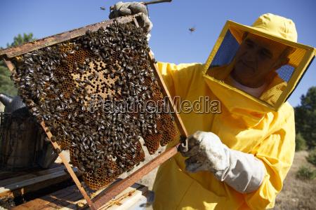 menschen leute personen mensch arbeitsstelle insekt