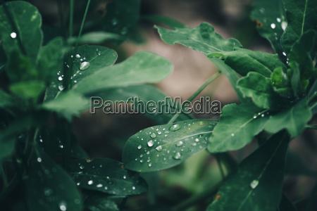 blatt baumblatt fluessig gruen gruenes gruener