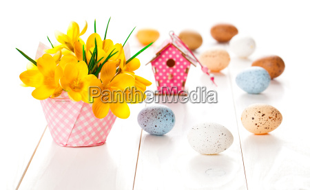 crocus flowers on white wooden background