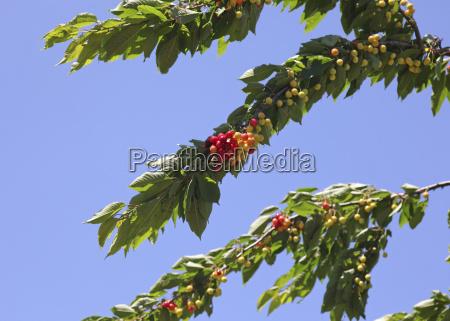 blatt baumblatt baum gruen gruenes gruener