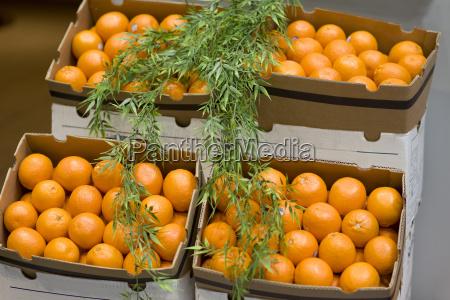 kartons mit orangen auf dem wochenmarkt
