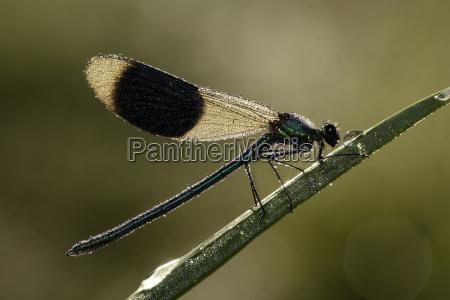 insekt tragflaeche fluegel outdoor freiluft freiluftaktivitaet