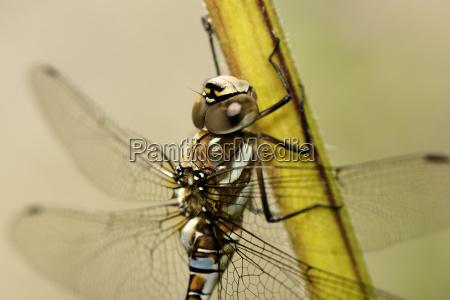 tier insekt portrait portraet potrait tierportrait