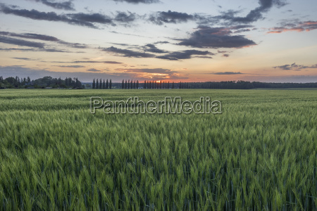 germany lower saxony field at sunset