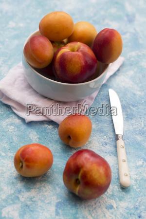 schuessel aprikosen und nektarinen