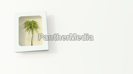 palm tree in a white box