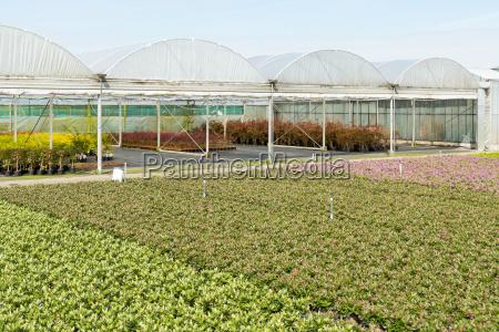 landwirtschaft ackerbau gartenbau baumgarten kinderkrippe gartenbaukunst
