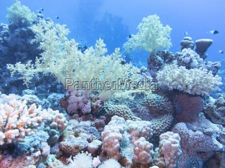 unterwasser unterwasser natur