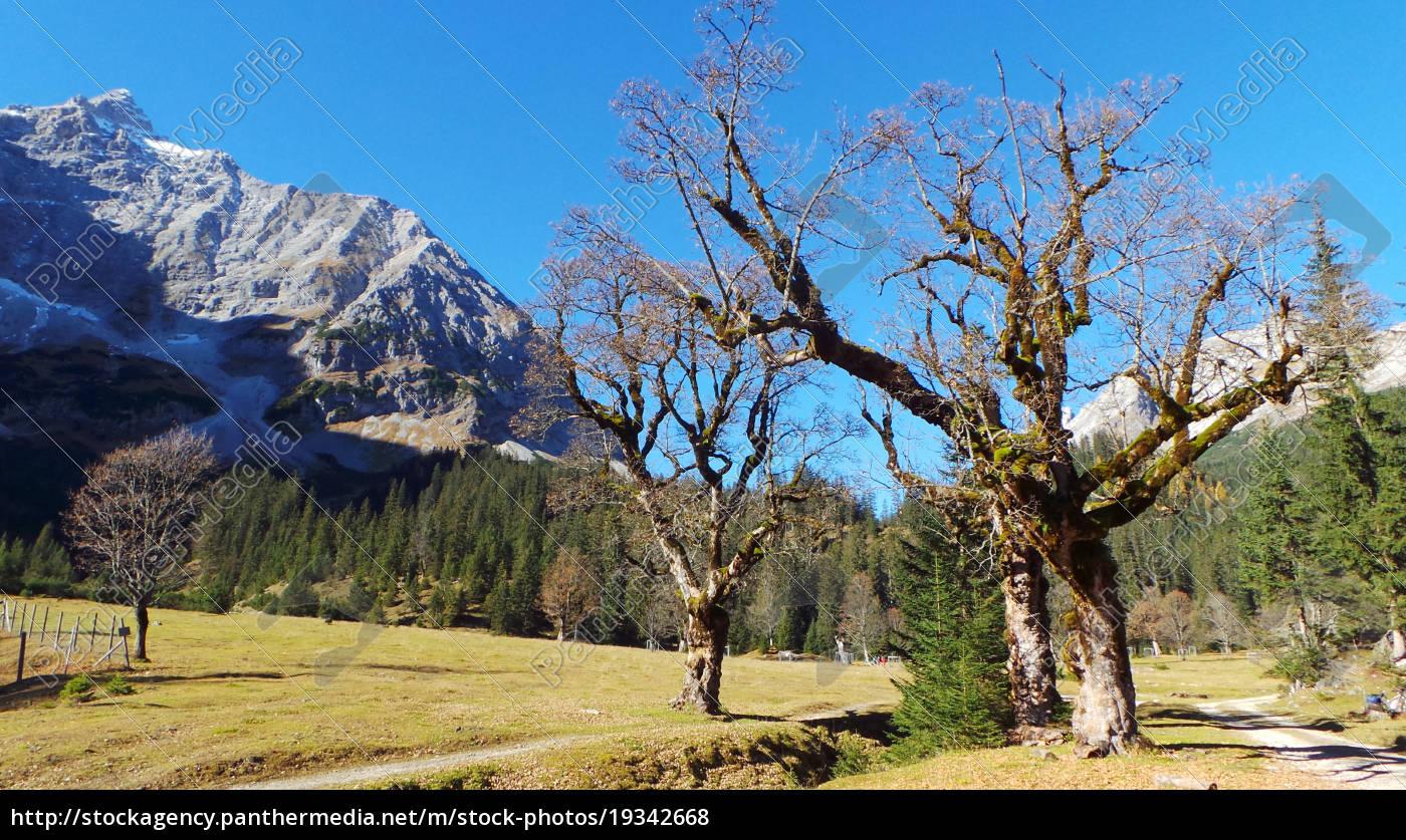 kleiner Ahornboden, Eng, Tirol, Karwendel, Österreich, Naturschutz - 19342668