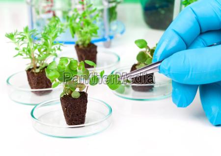 forschung von jungen pflanzen im labor