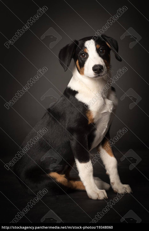 hundewelpe, macht, sitz, - 19348060