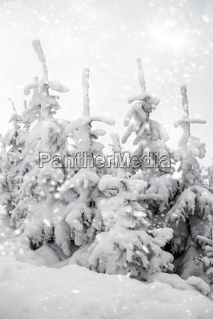 baeume mit schnee in den bergen