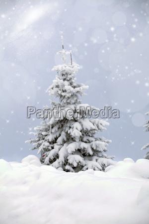 baeume mit schnee bedeckt in den