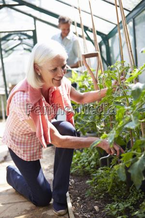 mittleren alters paar nach betreuung tomaten
