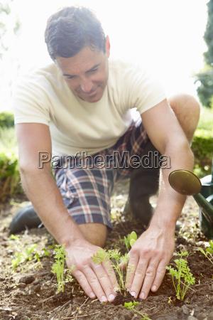 man planting seedling in ground on