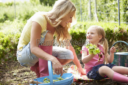 mother and daughter harvesting radish on