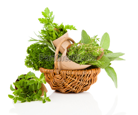 fresh herbs oregano rosemary parsley and