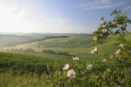 rolling hills tuscany italy