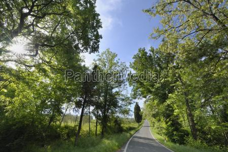 country road tuscany italy