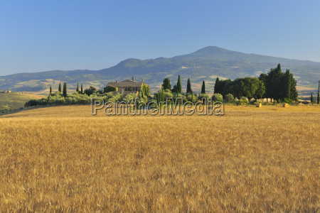 tuscany countryside with wheat field in