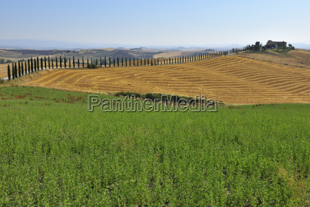 tuscany countryside in the summer monteroni