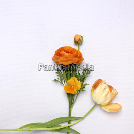 cut orange flowers ranunculus pansy and