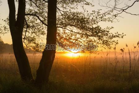 trees at sunrise on misty morning