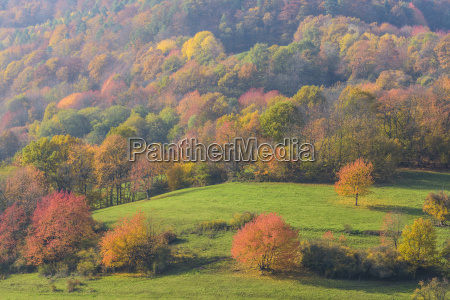 countryside with colorful cherry trees in