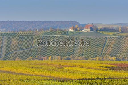 colorful vineyards in autumn vogelsburg volkach