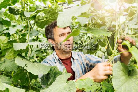 einschlag blatt baumblatt maennlich mannhaft maskulin