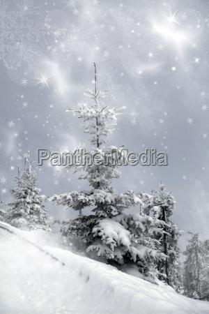 schneebedeckte kiefer in den bergen