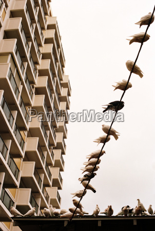 birds perched on wire and balcony