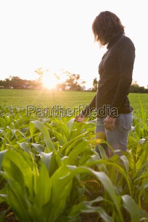woman standing amongst new corn crop