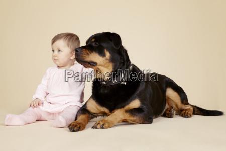 studio portrait of baby girl petting