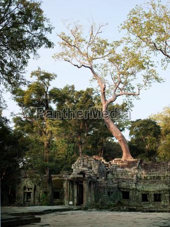 fahrt reisen religion tempel baum asien