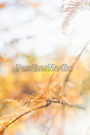 close up autumnal shot of tree